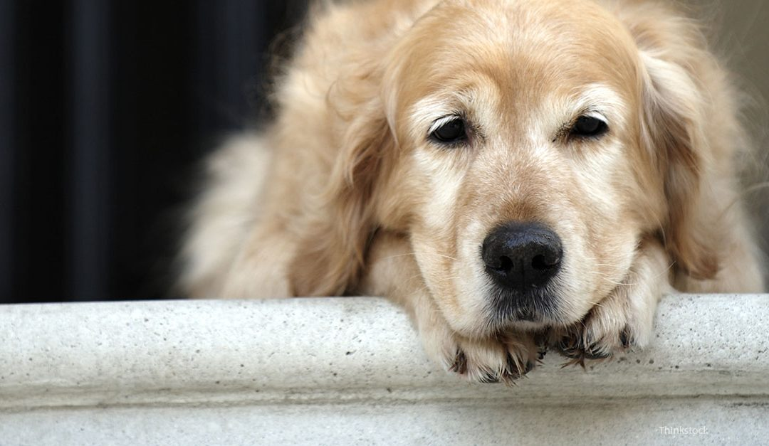 Signs of Arthritis In Your Pet