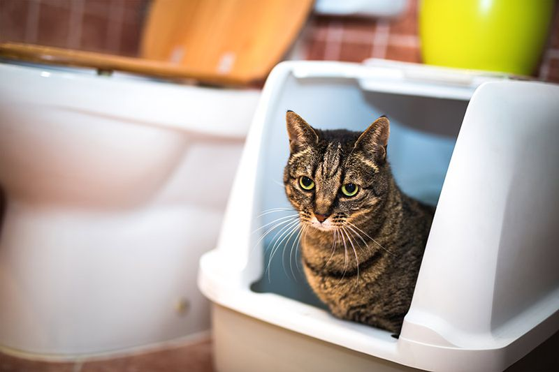 Where Should My Cat's Litter Box Go?