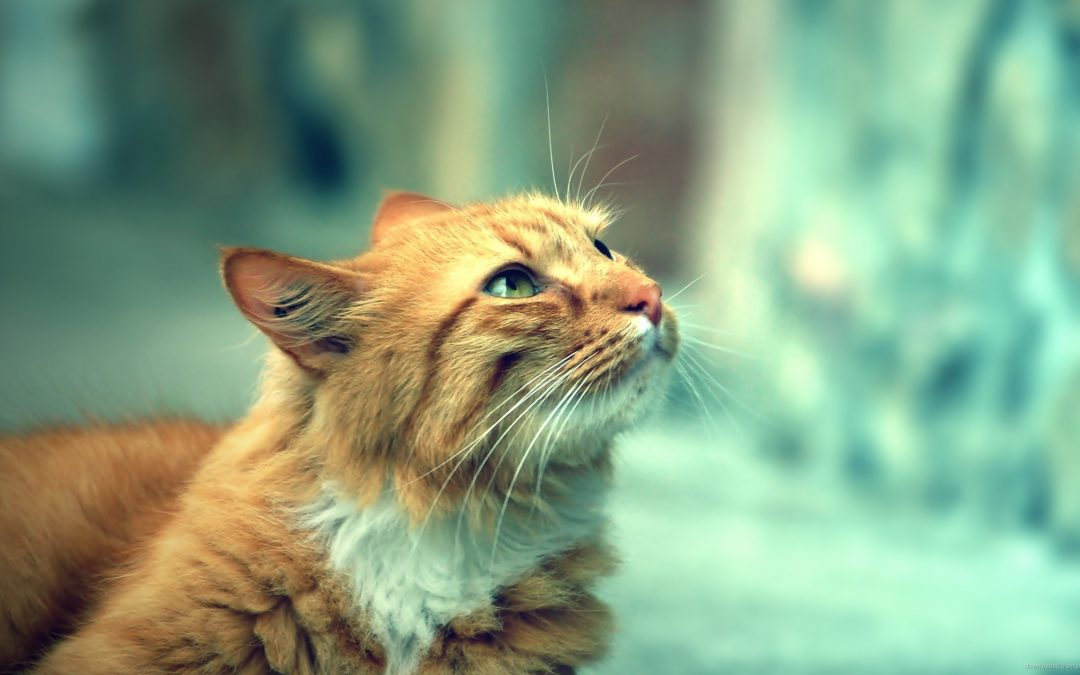 Silent Killers of Cats and Their Symptoms