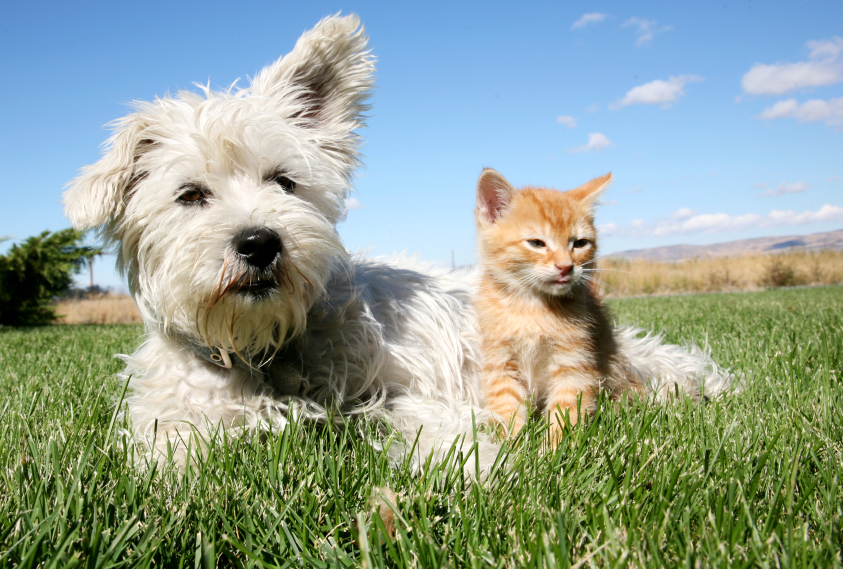 Summer First Aid Tips For Your Pet