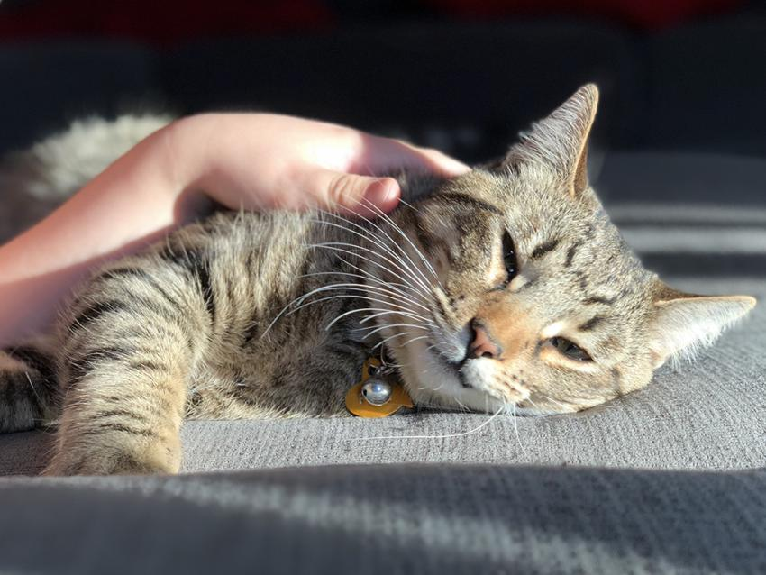 Everything You Need To Know About Ringworm In Your Cat